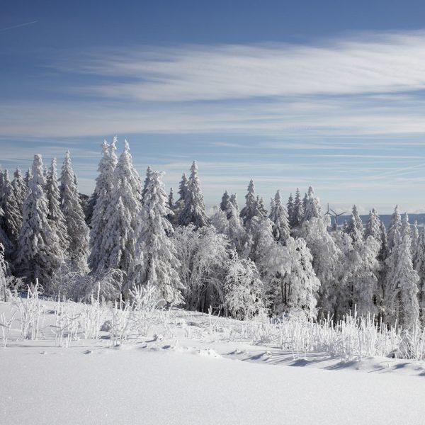 Winter auf dem Kandel