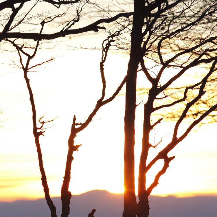 Buchenäste bei Sonnenuntergang